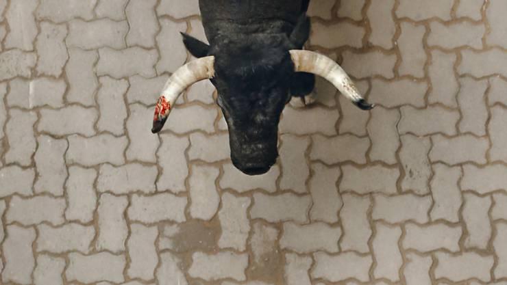Der junge Stier drang in die Denner-Filiale ein und kam nach kurzer Zeit wieder heraus. (Archivbild)