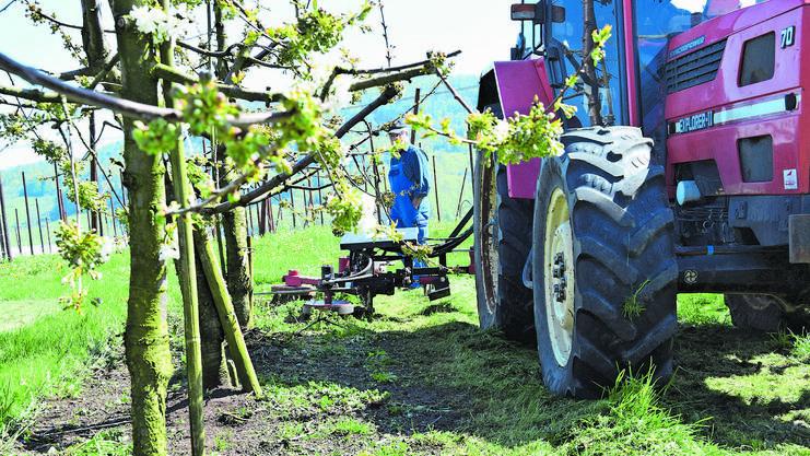 Mit einem bodenschonenden Hackgerät statt Herbiziden kann im Kirschenanbau der Humusaufbau gefördert werden.