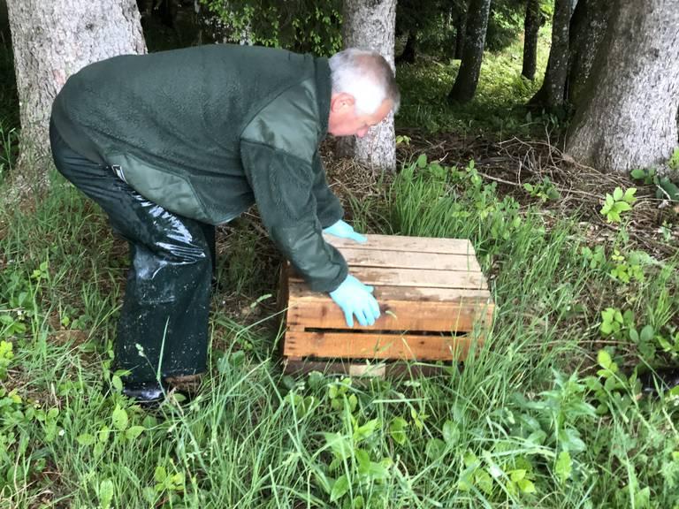 Mit einem Holzharrass werden die Kitze zugedeckt, um sie vor dem Mäher zu schützen. (Bild: pd)
