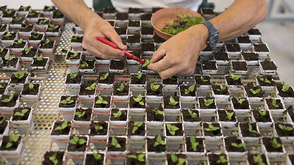 Forschungslabor beim Agrochemikonzern Syngenta: Der WWF Schweiz hat sich bei einem Verfahren zur Überprüfung von Pflanzenschutzmittel vor Gericht die Mitwirkung erstritten. (Symbolbild)