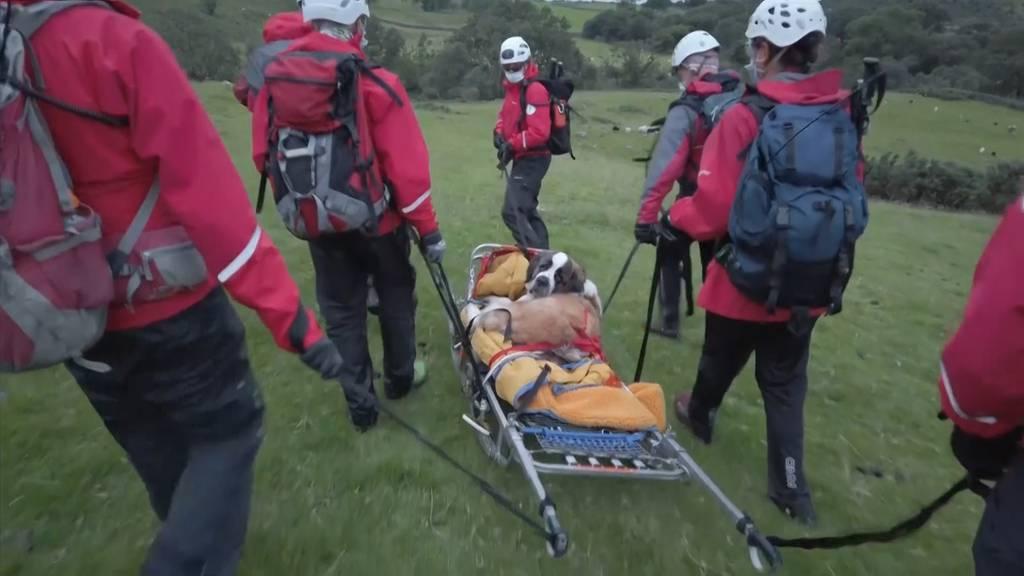 UK: Bernhardinerin «Daisy» muss vom Berg gerettet werden