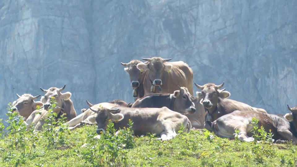 Hundeverbot auf der Bannalp bis Ende Alpsommer