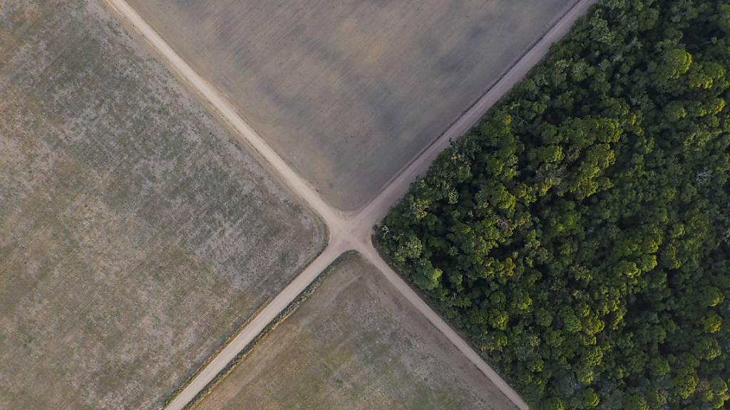 Teil des Amazonas-Regenwaldes steht neben Sojafeldern. Indigene Gruppen aus Südamerika pochen vor dem der Weltnaturschutzunion (IUCN) darauf, 80 Prozent des Amazonasgebiets bis 2025 unter Schutz zu stellen. Die neuen geschützten Gebiete wollen sie außerdem selbst verwalten.