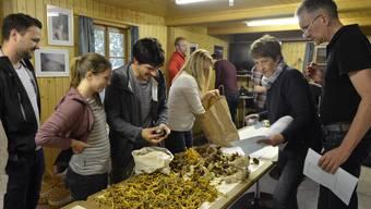 Familien aus der ganzen Region lassen ihre selbstgesammelten Pilze überprüfen