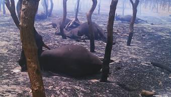 Nach dem Anschlag auf den Viehmarkt blieben tote Kühe liegen (Archiv)