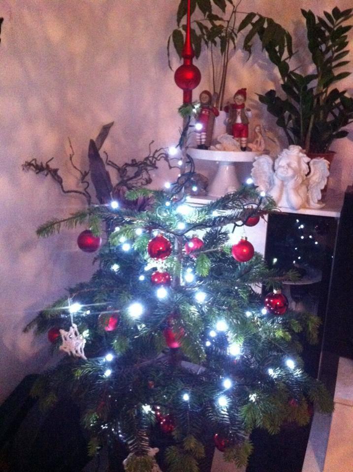 Der Christbaum von Natalia kommt aus dem Garten in den Topf und nach Weihnachten wieder in die Natur.