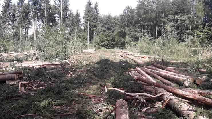 «Die Bäume, die auf dem Bild noch stehen, werden vermutlich in den nächsten zwei, drei Jahren auch noch wegfallen, da sie jetzt sehr exponiert stehen, was die Schadenfläche zusätzlich nochmals vergrössert», schreibt der Mutscheller Revierförster Christoph Schmid.