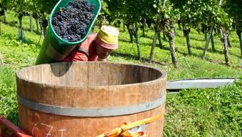 Weinkultur im Aargau. ZVG