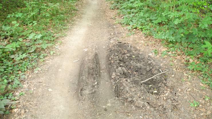 Hier haben sich die Wildschweine den Trail zunutze gemacht.