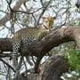 Tiere, schöne Aussichten und Luxus-Camps: Auf Safari in Botswana im November 2019