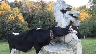 Pius Wietlisbacher: «Auch Kühe lieben Dottikon»