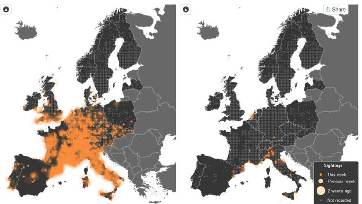 Während der Hausrotschwanz (Karte links) Mitte März 2013 bereits aus den Winterquartieren zurück war, hatte sein engster Verwandter, der Gartenrotschwanz (Karte rechts), erst die Mittelmeerküste erreicht.