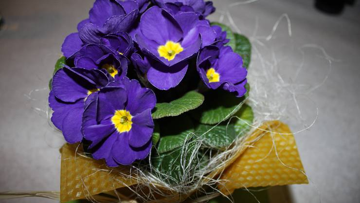 Dekoration mit Bienenwaben und farbigen Primeli