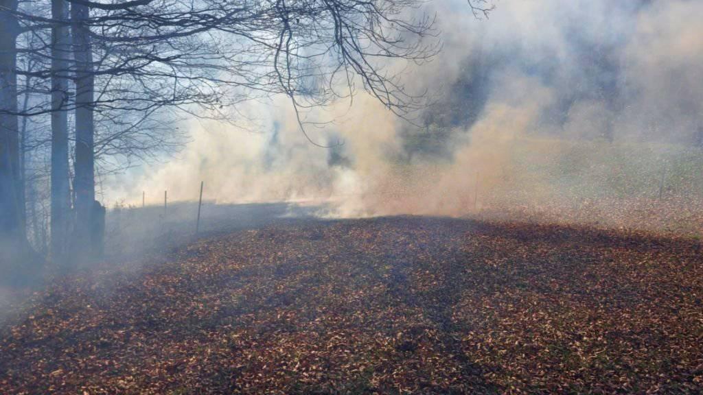 Viel Rauch: Verwehte Glut entzündete das Laub in Trimbach SO.