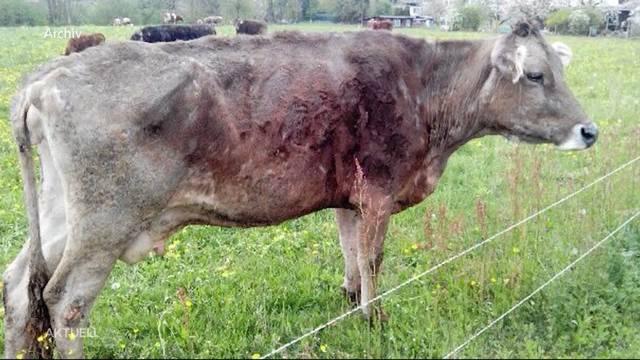 Boninger Tierdrama wird gesühnt