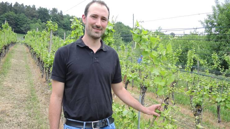 Weinbauer Daniel Jeck liess bei seinen Reben eine Frostrute als Reserve stehen.