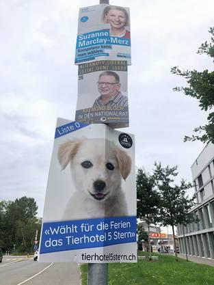 Liste 0 für Hundehotel: Gewitzte Trittbrettfahrer profitieren geschickt, so wie hier in Aarau, von den Wahlplakaten.
