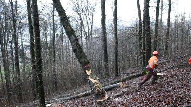 Actionreicher Beruf: Forstwartlehrling Yves Taddeo fällt einen Baum.