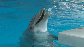 Die Connyland Delfine geben diese Woche ihre letzte Vorstellung.