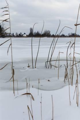 Auf dem Inkwilersee gibt es bereits eine dünne Eisschicht.