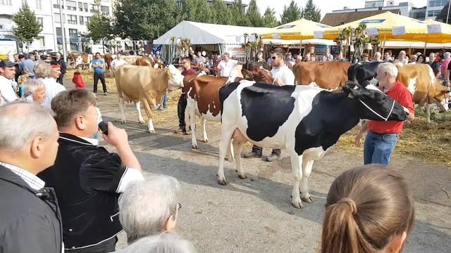 Die Wahl zur Miss Chästag 2017 und was eine Kuh zur Siegerin macht