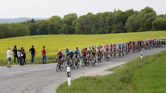 Das Fahrerfeld an der letztjährigen Tour de Romandie.