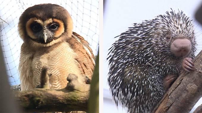 Internationale Vogelschar / Seltene Tierarten