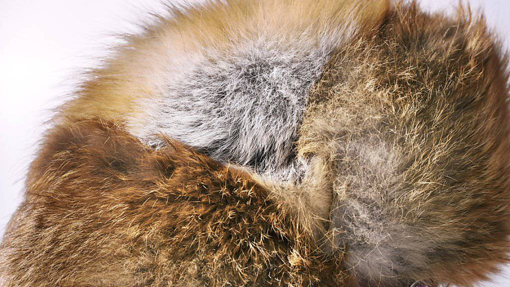 Woher und von welchem Tier? In über 70 Prozent der kontrollierten Verkaufsstellen sind die Pelzprodukte nicht vorschriftsgemäss deklariert. (Themenbild)