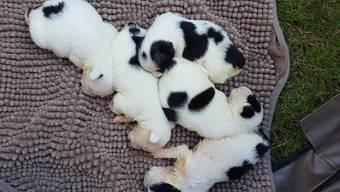 Ausgesetzte Hundewelpen im Tierheim an der Birs.