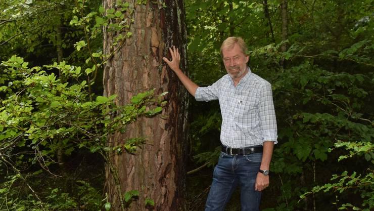 Anton Bürgi vor einer Lärche im Bremgarter Wald.