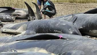 Wale waren in einer schlechten Verfassung