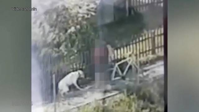 Hundeprügler: Ist die Videoveröffentlichung eine Straftat?