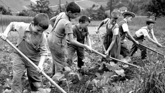 Feldarbeit von sechs Buben aus der Armenerziehungsanstalt «Dorneren» ob Wattenwil im Gürbetal in den 1950er-Jahren.