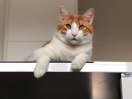 Die typische Hauskatze ist nicht so typisch, denn ihr Fell kann in Farbe und Form variieren.