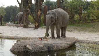 Für die Elefanten war die Wasserpanne kein Problem