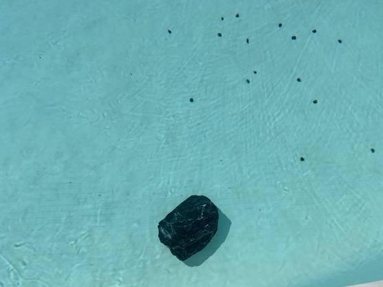 Die Steine wurden in der Nacht auf Sonntag geworfen.