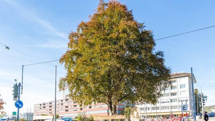 Nun bleibt nur eins übrig: Daumendrücken, dass der Baum die Prozedur überlebt. (Archiv)