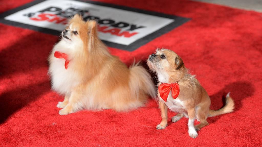 Hunde dürfen weiter als nur auf den Roten Teppich.