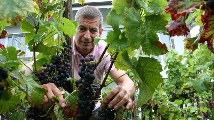 Manfred Küng kann sich künftig wieder vermehrt seinen Weinstöcken widmen.