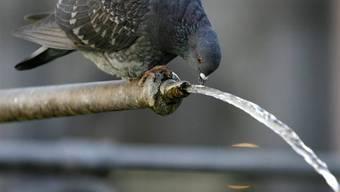 Ein Taubenschlag für Stadtberliner Tauben (Symbolbild)