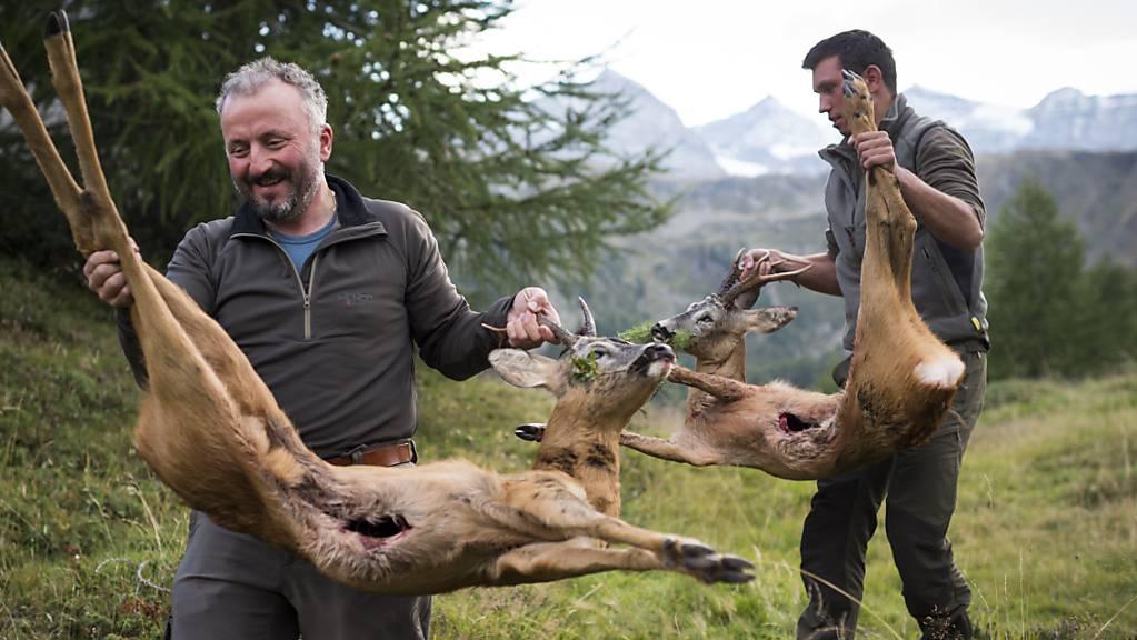 Die zu grossen Bestände von Hirschen und Rehen sollen in Graubünden mit einer weiteren Reihe jagdlicher Massnahmen unter Kontrolle gebracht werden. (Archivbild)