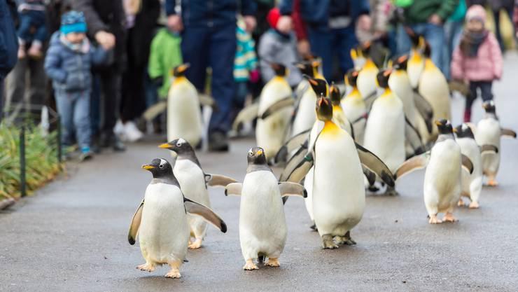 Der fehlende Pinguinspaziergang habe zum Rückgang in den Besucherzahlen beigetragen.