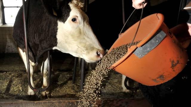 Ein Bauer füttert seine Kühe mit Kraftfutter (Symbolbild)