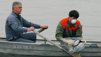 Nach dem Auftreten der Vogelgrippe sind rund um den Bodensee Vorsichtsmassnahmen ergriffen worden. (Archivbild)