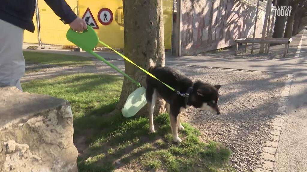 Schwyzer revolutioniert das Aufsammeln von Hundekot