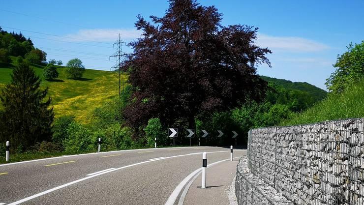 Die Blutbuche neben der Staffelegg-Strasse wurde nach dem Unfall im letzten September mit Erfolg verarztet.
