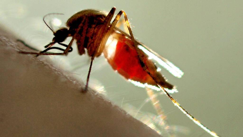 Diese Hausmittel vertreiben Stechmücken und lindern den Juckreiz