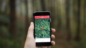 Sie fragen das Internet, wenn sie den Wald vor lauter Bäumen nicht mehr sehen: 90 Prozent der Menschen in der Schweiz sind Internet-User. Vor allem Junge surfen hauptsächlich mit dem Handy.