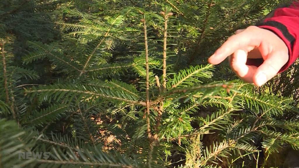 Wild bedroht Jungbäume: Jagdsaison verlängern?