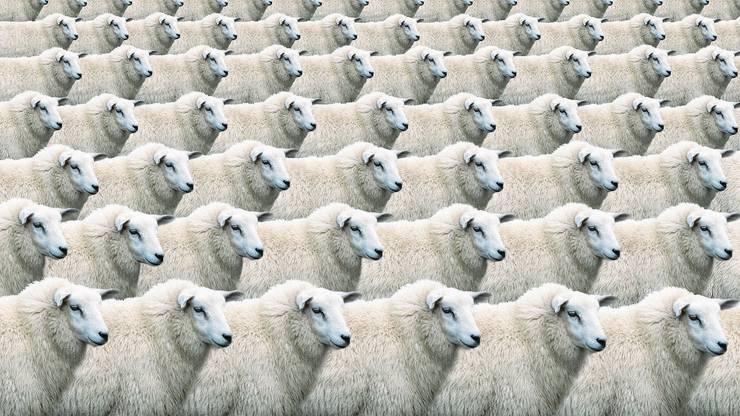 Es muss nicht immer ein Text sein. Mit «Copy and Paste» lässt sich selbst aus einem Schaf eine Herde erschaffen.
